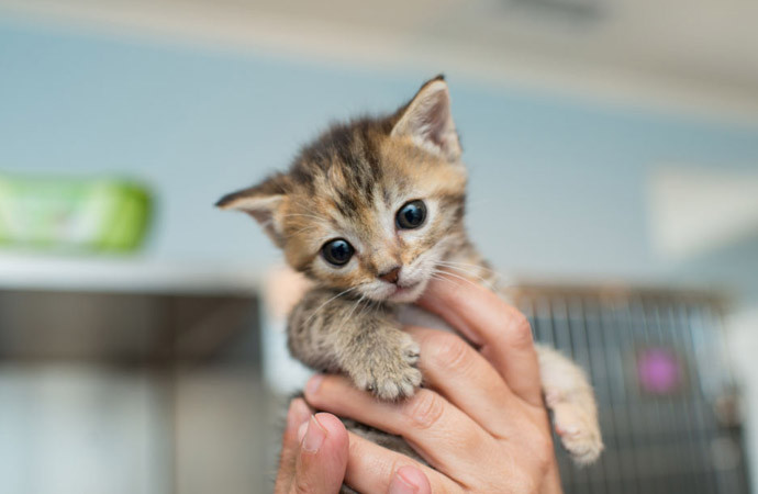 Anak kucing kecil